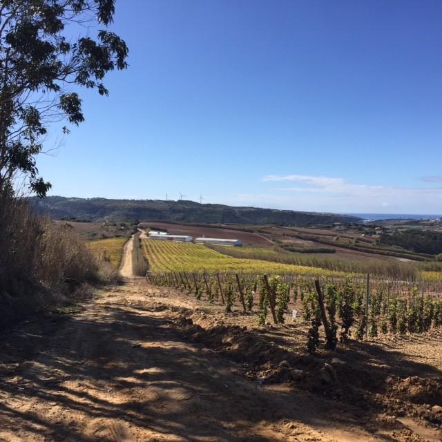 Mountain biking (BTT) Ericeira trail by the vines