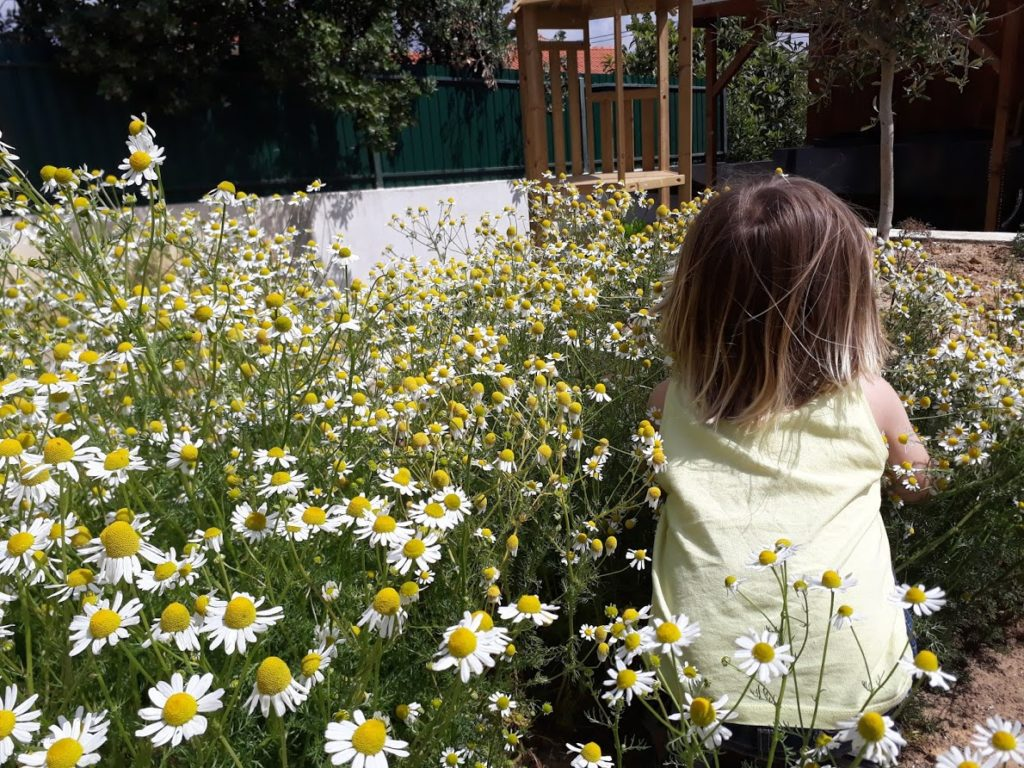 child playing in a Chamomile garden