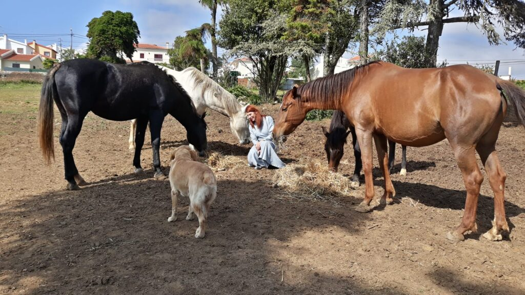 Equine Therapy Ericeira